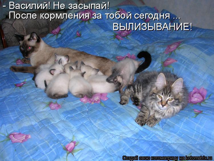 Котоматрица: - Василий! Не засыпай! После кормления за тобой сегодня ... ВЫЛИЗЫВАНИЕ!