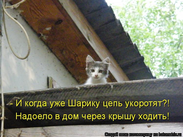 Котоматрица: - И когда уже Шарику цепь укоротят?! Надоело в дом через крышу ходить!