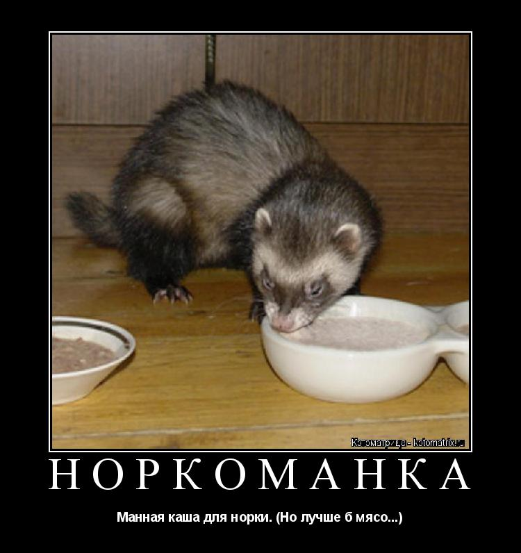Котоматрица: НОРКОМАНКА Манная каша для норки. (Но лучше б мясо...)