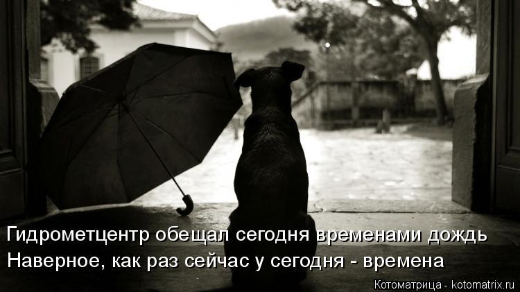 Котоматрица: Гидрометцентр обещал сегодня временами дождь Наверное, как раз сейчас у сегодня - времена