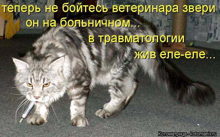 Котоматрица: теперь не бойтесь ветеринара звери он на больничном... в травматологии жив еле-еле...