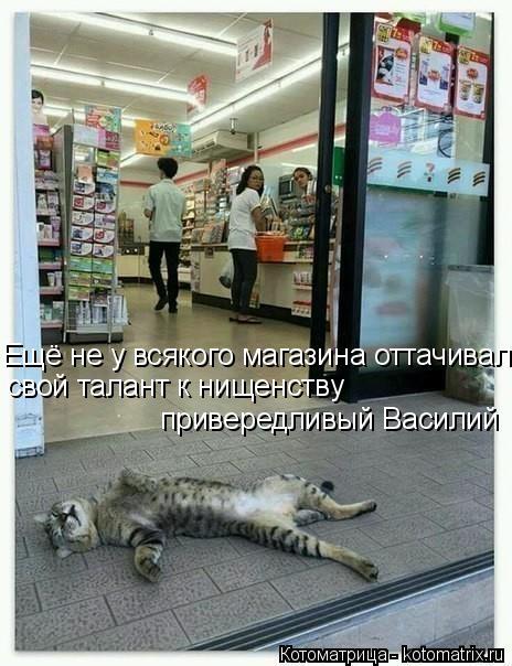 Котоматрица: Ещё не у всякого магазина оттачивал  свой талант к нищенству  привередливый Василий