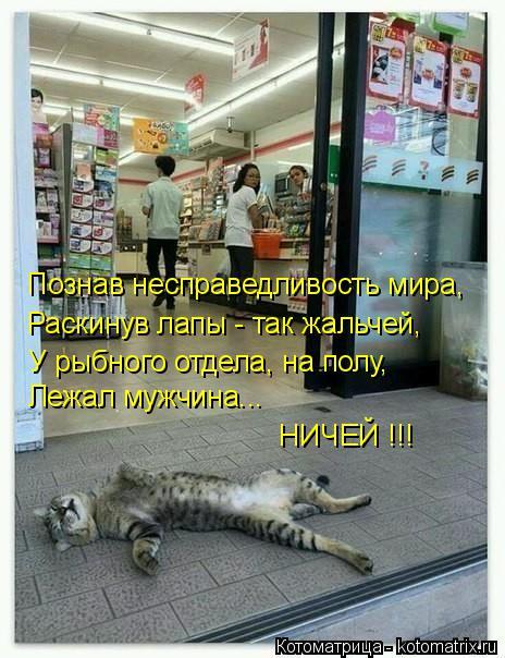 Котоматрица: Познав несправедливость мира, Раскинув лапы - так жальчей, У рыбного отдела, на полу, Лежал мужчина... НИЧЕЙ !!!