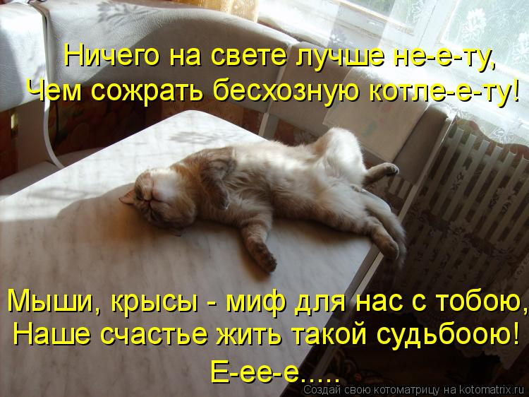 Котоматрица: Ничего на свете лучше не-е-ту, Чем сожрать бесхозную котле-е-ту! Мыши, крысы - миф для нас с тобою, Наше счастье жить такой судьбоою! Е-ее-е.....