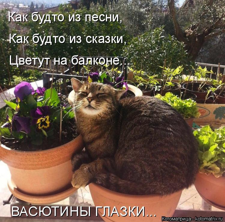 Котоматрица: Как будто из сказки, Цветут на балконе... Как будто из песни,  ВАСЮТИНЫ ГЛАЗКИ...
