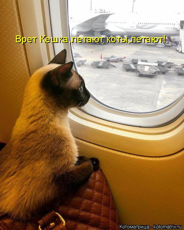 Котоматрица: Врет Кешка,летают коты,летают!