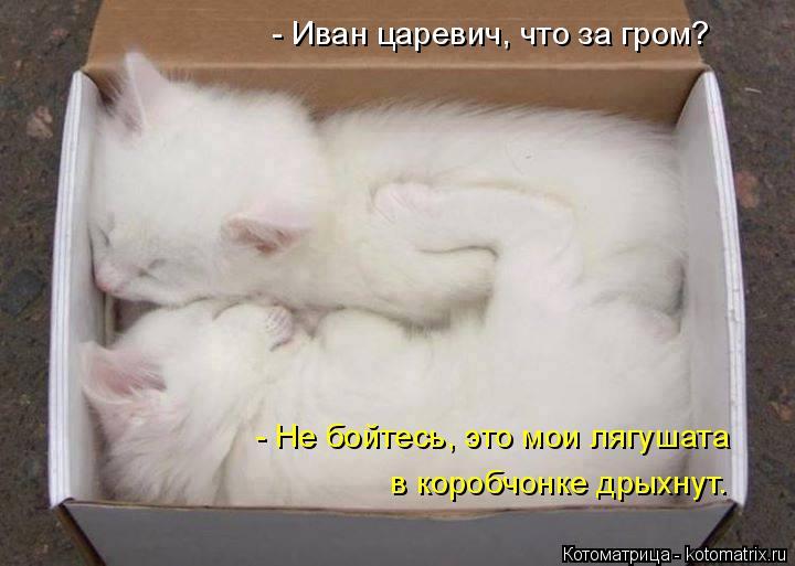 Котоматрица: - Иван царевич, что за гром? - Не бойтесь, это мои лягушата в коробчонке дрыхнут.