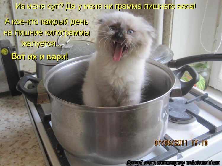 Котоматрица: Из меня суп? Да у меня ни грамма лишнего веса! А кое-кто каждый день  на лишние килограммы жалуется... Вот их и вари!