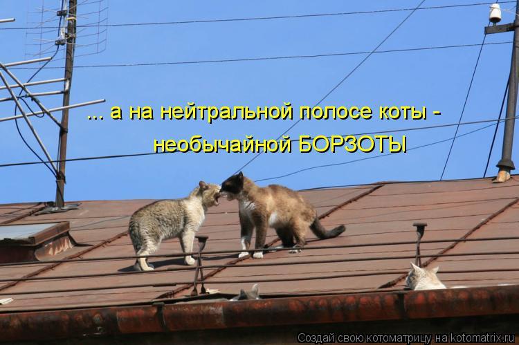 Котоматрица: ... а на нейтральной полосе коты - необычайной БОРЗОТЫ