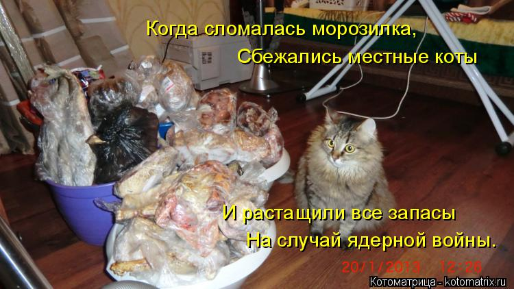 Котоматрица: Когда сломалась морозилка, Сбежались местные коты И растащили все запасы  На случай ядерной войны.