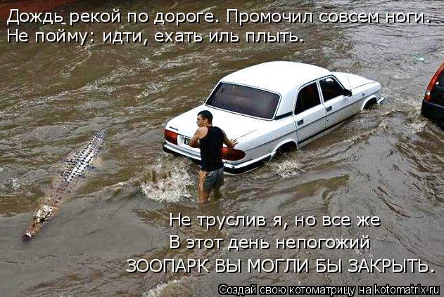 Котоматрица: Дождь рекой по дороге. Промочил совсем ноги. Не пойму: идти, ехать иль плыть. ЗООПАРК ВЫ МОГЛИ БЫ ЗАКРЫТЬ. В этот день непогожий  Не труслив я,