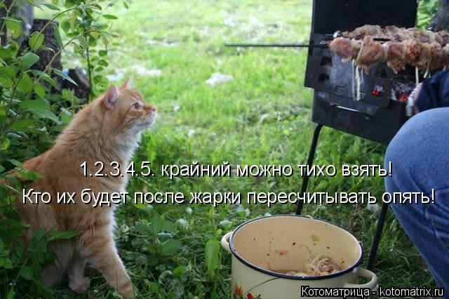 Котоматрица: 1.2.3.4.5. крайний можно тихо взять! Кто их будет после жарки пересчитывать опять!