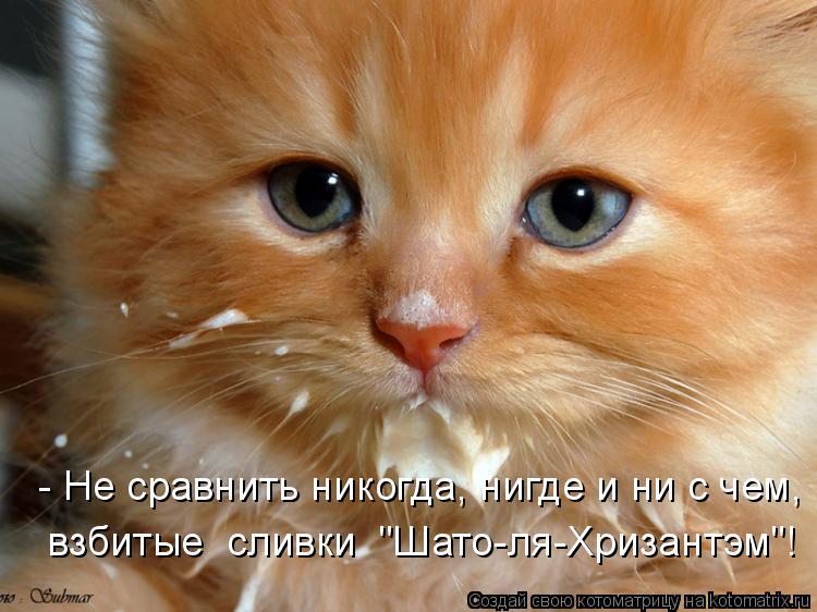 """Котоматрица: - Не сравнить никогда, нигде и ни с чем, взбитые  сливки  """"Шато-ля-Хризантэм""""!"""