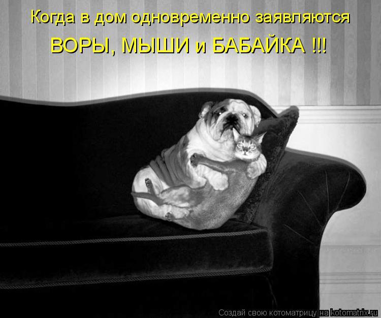 Котоматрица: Когда в дом одновременно заявляются ВОРЫ, МЫШИ и БАБАЙКА !!!