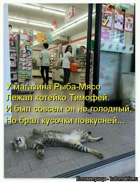 Котоматрица: У  У магазина Рыба-Мясо Лежал котейко Тимофей. И был совсем он не голодный, Но брал кусочки повкусней...