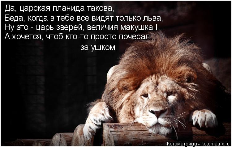 Котоматрица: Да, царская планида такова, Беда, когда в тебе все видят только льва, Ну это - царь зверей, величия макушка ! А хочется, чтоб кто-то просто поче?
