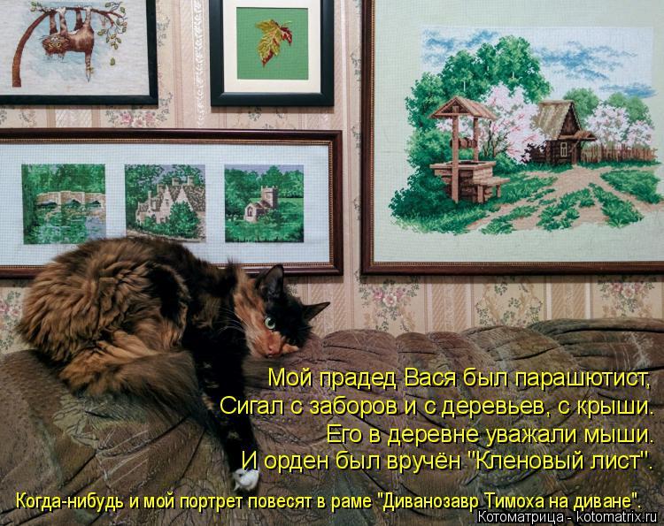 """Котоматрица: Мой прадед Вася был парашютист, Сигал с заборов и с деревьев, с крыши. Его в деревне уважали мыши. И орден был вручён """"Кленовый лист"""". Когда-ни?"""