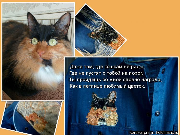 Котоматрица: Даже там, где кошкам не рады, Где не пустят с тобой на порог, Как в петлице любимый цветок. Ты пройдёшь со мной словно награда,