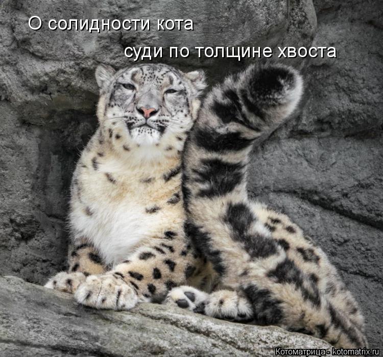 Котоматрица: О солидности кота суди по толщине хвоста