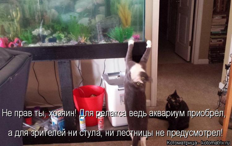 Котоматрица: Не прав ты, хозяин! Для релакса ведь аквариум приобрёл, а для зрителей ни стула, ни лестницы не предусмотрел!