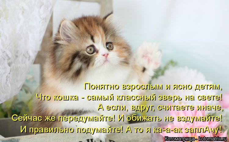 Котоматрица: Понятно взрослым и ясно детям, Что кошка - самый классный зверь на свете! А если, вдруг, считаете иначе, Сейчас же передумайте! И обижать не вз