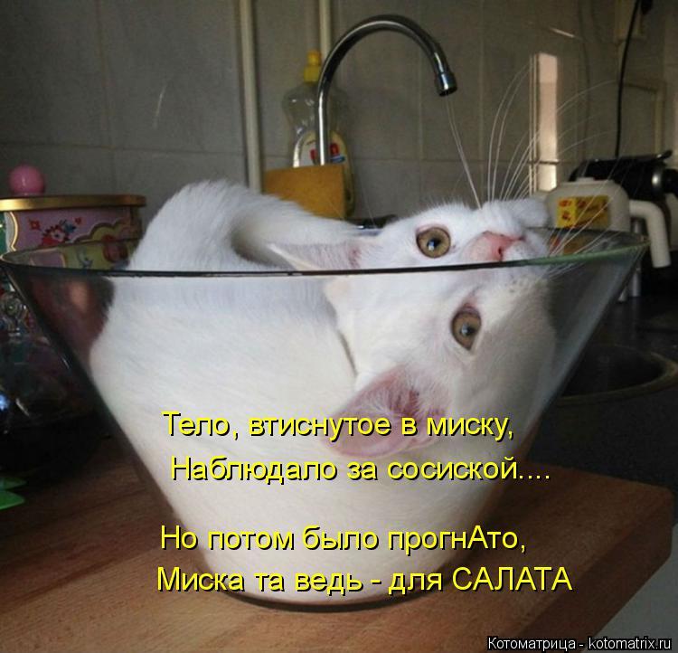 Котоматрица: Тело, втиснутое в миску, Наблюдало за сосиской.... Но потом было прогнАто, Миска та ведь - для САЛАТА