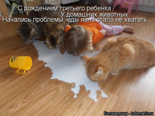 Котоматрица: С рождением третьего ребенка У домашних животных Начались проблемы -еды явно стало не хватать...