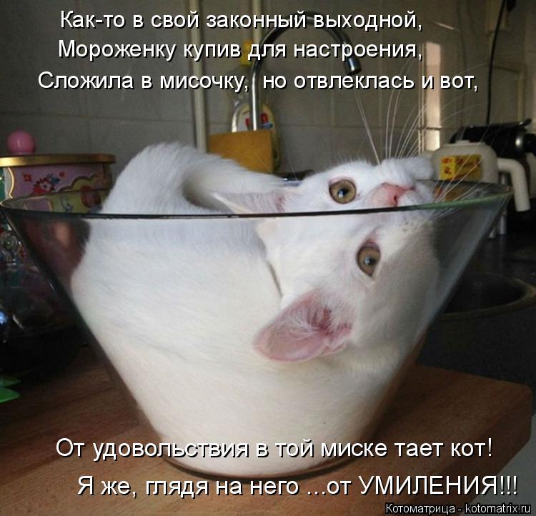 Котоматрица: Как-то в свой законный выходной, Мороженку купив для настроения, Сложила в мисочку,  но отвлеклась и вот, От удовольствия в той миске тает ко?