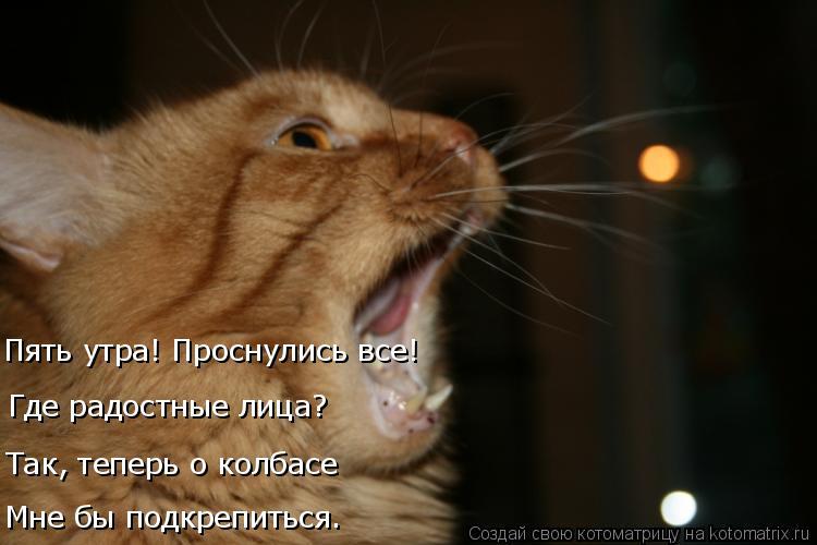 Котоматрица: Мне бы подкрепиться. Так, теперь о колбасе Где радостные лица? Пять утра! Проснулись все!