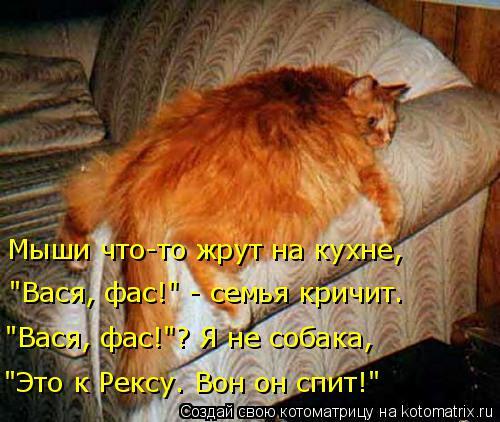 """Котоматрица: Мыши что-то жрут на кухне, """"Это к Рексу. Вон он спит!"""" """"Вася, фас!""""? Я не собака, """"Вася, фас!"""" - семья кричит."""