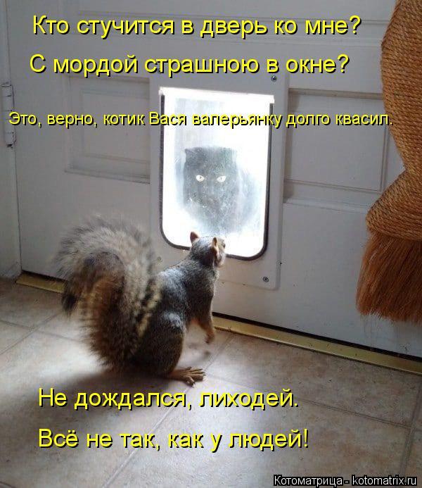 Котоматрица: Кто стучится в дверь ко мне? С мордой страшною в окне? Это, верно, котик Вася валерьянку долго квасил. Не дождался, лиходей. Всё не так, как у л?