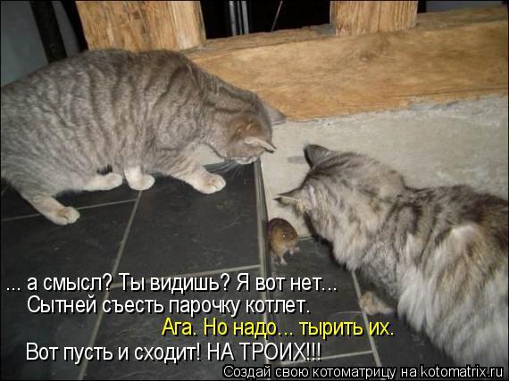 Котоматрица: ... а смысл? Ты видишь? Я вот нет... Сытней съесть парочку котлет. Ага. Но надо... тырить их. Вот пусть и сходит! НА ТРОИХ!!!