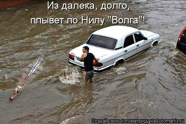 """Котоматрица: Из далека, долго, плывет по Нилу """"Волга""""!"""