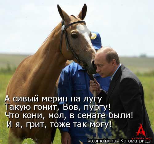 Котоматрица: А сивый мерин на лугу Такую гонит, Вов, пургу! Что кони, мол, в сенате были! И я, грит, тоже так могу!