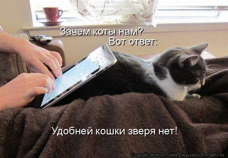 Котоматрица: Зачем коты нам?  Вот ответ: Удобней кошки зверя нет!