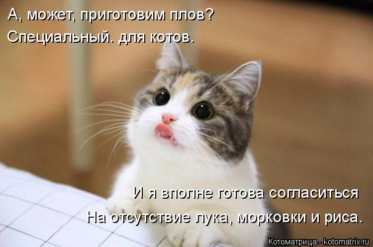 Котоматрица: А, может, приготовим плов? Специальный. для котов. И я вполне готова согласиться На отсутствие лука, морковки и риса.