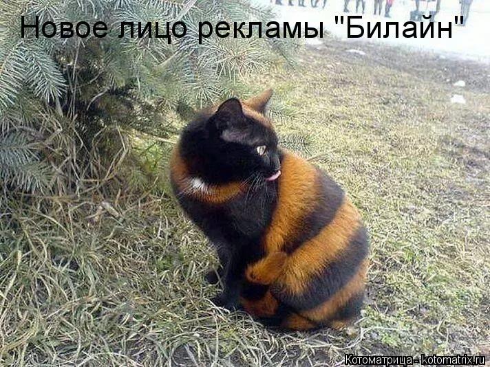 """Котоматрица: Новое лицо рекламы """"Билайн"""""""