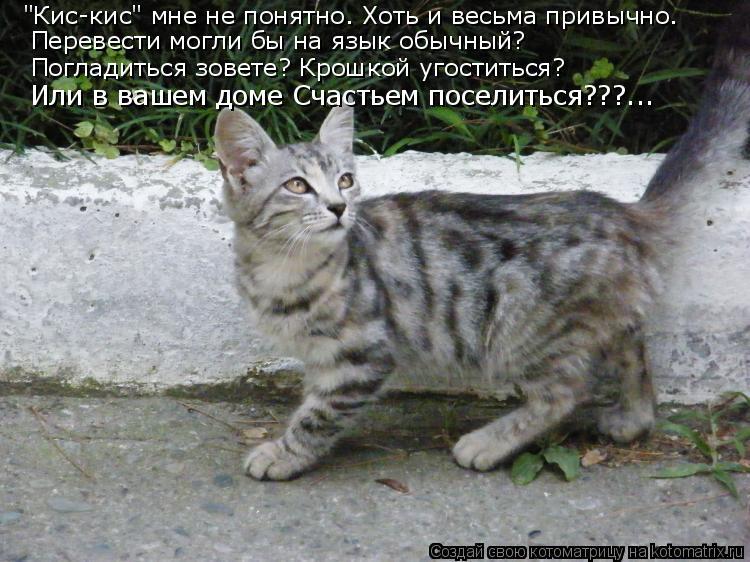 """Котоматрица: """"Кис-кис"""" мне не понятно. Хоть и весьма привычно. Перевести могли бы на язык обычный? Погладиться зовете? Крошкой угоститься? Или в вашем доме"""