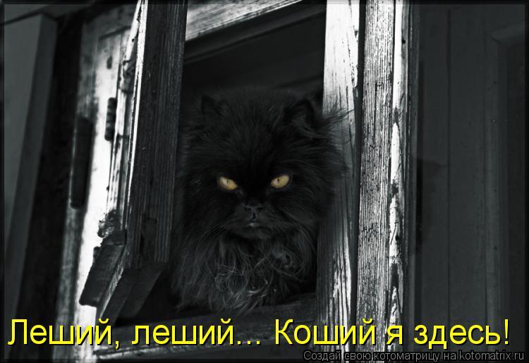 Котоматрица: Леший, леший... Коший я здесь!