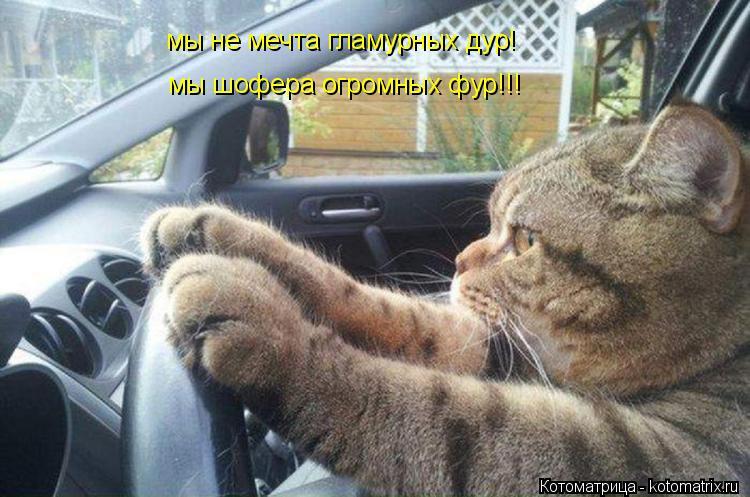 Котоматрица: мы не мечта гламурных дур! мы шофера огромных фур!!!