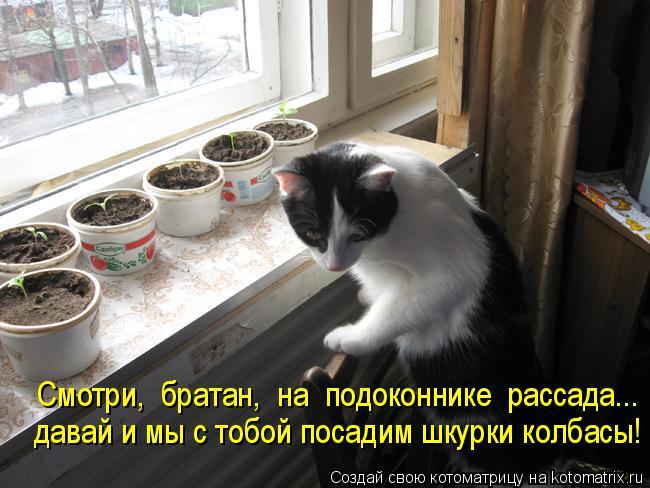 Котоматрица: Смотри,  братан,  на  подоконнике  рассада... давай и мы с тобой посадим шкурки колбасы!