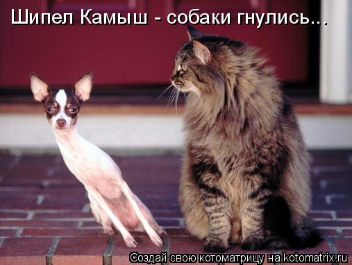 Котоматрица: Шипел Камыш - собаки гнулись...
