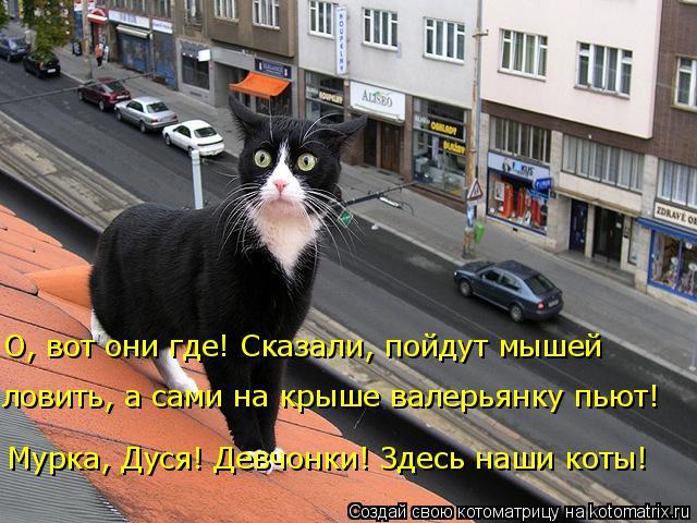 Котоматрица: Мурка, Дуся! Девчонки! Здесь наши коты!  О, вот они где! Сказали, пойдут мышей  ловить, а сами на крыше валерьянку пьют!