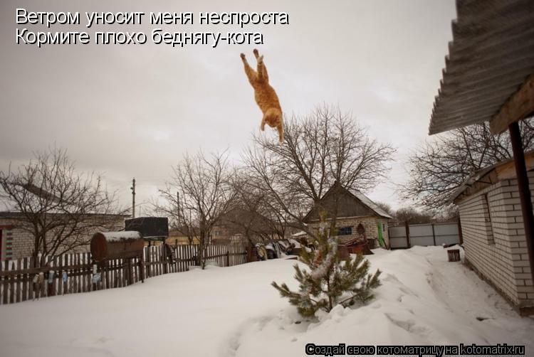 Котоматрица: Ветром уносит меня неспроста Кормите плохо беднягу-кота