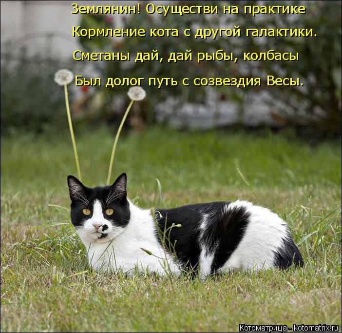 Котоматрица: Землянин! Осуществи на практике Кормление кота с другой галактики. Сметаны дай, дай рыбы, колбасы Был долог путь с созвездия Весы.