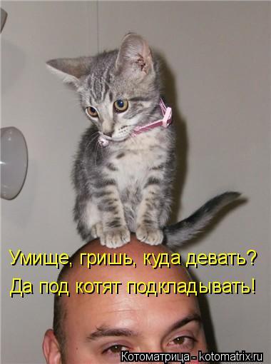 Котоматрица: Умище, гришь, куда девать? Да под котят подкладывать!
