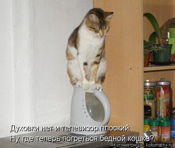 Котоматрица: Ну, где теперь погреться бедной кошке? Духовки нет и телевизор плоский...