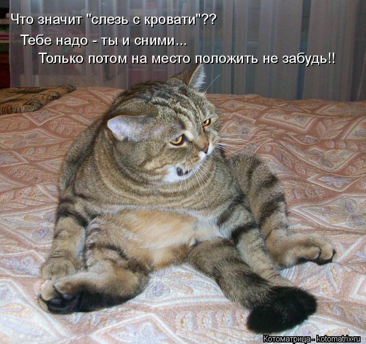 """Котоматрица: Что значит """"слезь с кровати""""?? Только потом на место положить не забудь!! Тебе надо - ты и сними..."""