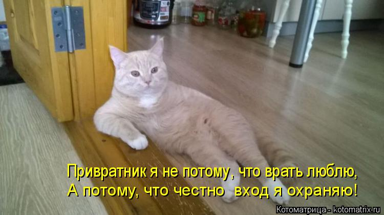 Котоматрица: Привратник я не потому, что врать люблю, А потому, что честно  вход я охраняю!
