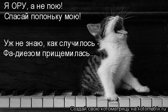 Котоматрица: Я ОРУ, а не пою! Спасай попоньку мою! Уж не знаю, как случилось - Фа-диезом прищемилась...